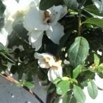 flori  pe trecute si lastari noi