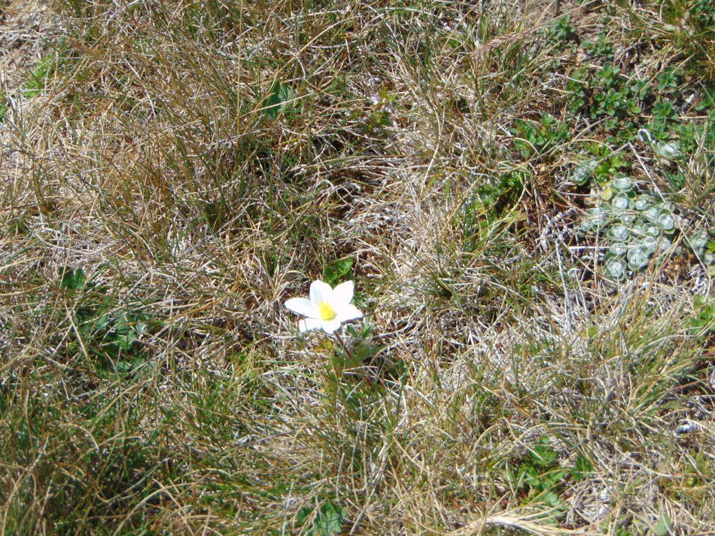prin iarba parjolita